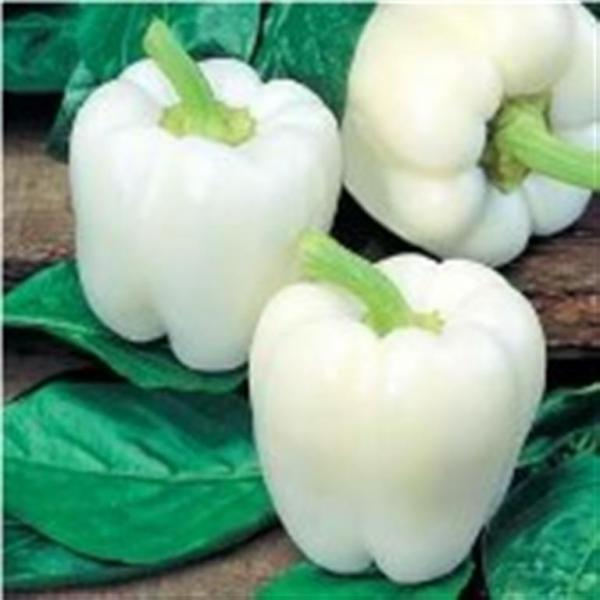 White Cloud Pepper 20 seeds